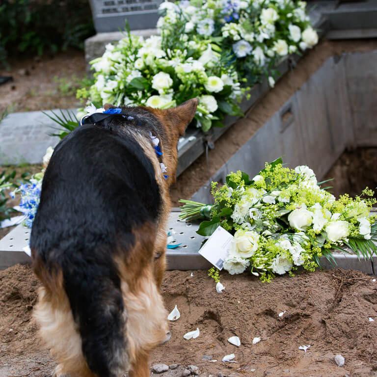 Lichte en sfeervolle uitvaartfotografie legt vast hoe liefdevol een hond afscheid neemt op het graf omringd met rouwbloemen.