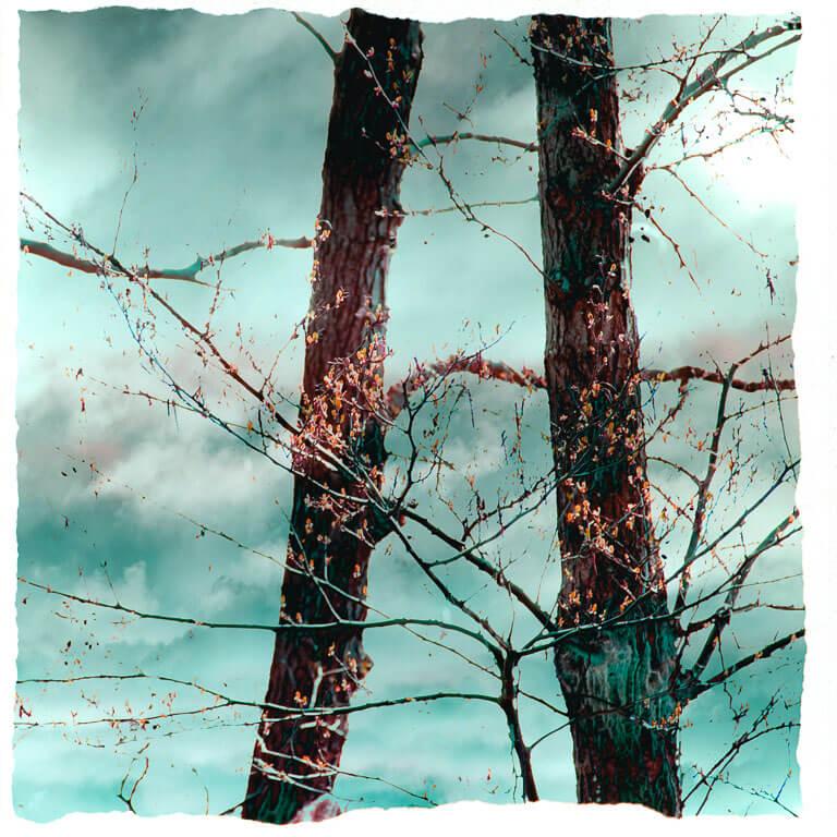 Afscheidskunst dat verstilling oproept, met een serene beeld van twee bomen in mysterieuze setting.